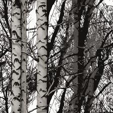 346-0611 Birch Wood Adhesive Film by Brewster