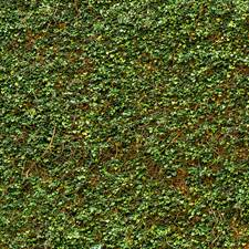 DM979 Ivy Wall Mural by Brewster