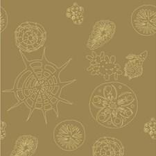 Sanddollar Novelty Wallcovering by Kravet Wallpaper