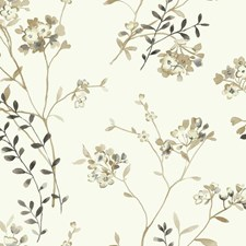 White/Cream/Beige Floral Medium Wallcovering by York